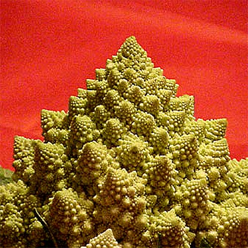 The Fractal Cauliflower